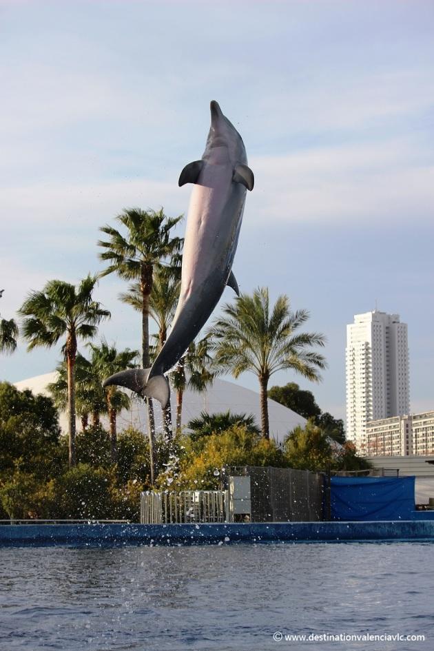Oceanografic Valencia delfin