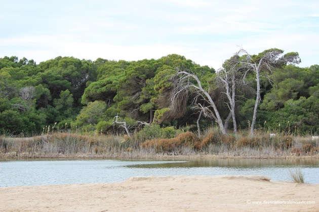 dunas-vegetacion-mediterranea-devesa-el-saler-valencia