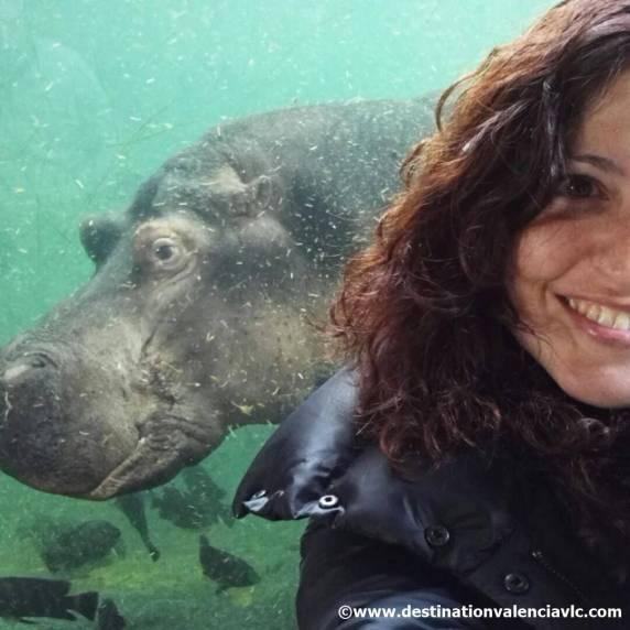 Hipopotamo-Bioparc-Valencia-copyright www.destinationvalenciavlc.com